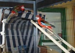 """Brutkasten für Vögel """"Alex"""" und """"Travel"""""""