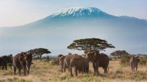Afrika Alex Travel