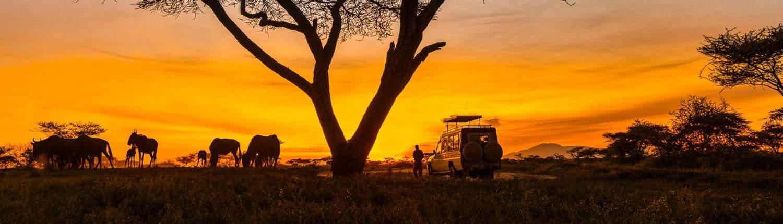 Safari Alex Travel