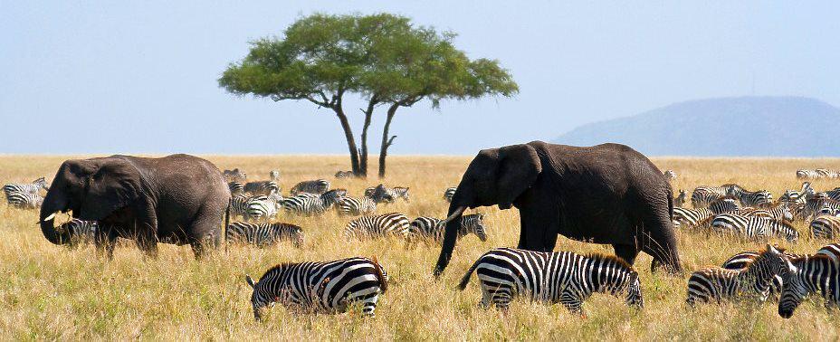 Tansania Alex Travel