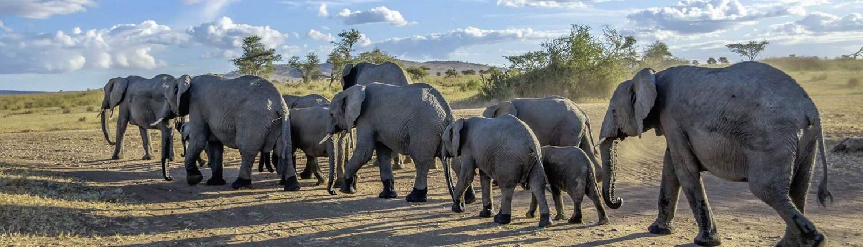 Elefanten Tansania Alex Travel