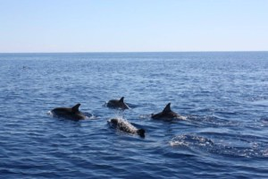 Delfine Sea Cloud Kreuzfahrten