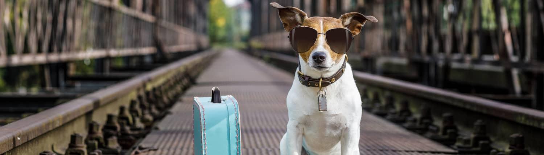 AlexTravel_hund mit koffer